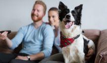 Avere un cane fa bene alla salute e allunga la vita