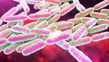 Il mix di probiotici che protegge e migliora le funzioni cerebrali