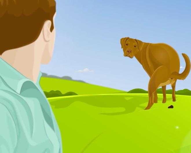 ecco perchè il tuo cane ti guarda quando fa i bisogni