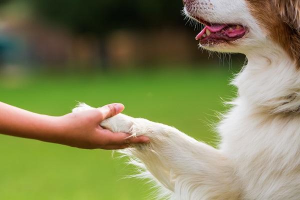 Zampe del cane: come proteggerle in estate